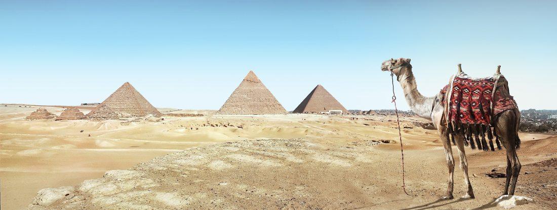 ancient-architecture-camel-931881